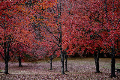 Photograph - Red October by Dan Poirier