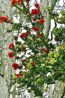Photograph - Red Ohia Lehua In Volcano Rainforest by Lehua Pekelo-Stearns