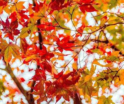 Photograph - Red On A Tree by Hyuntae Kim