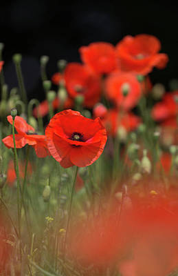 Photograph - Red On Black by Peter Walkden