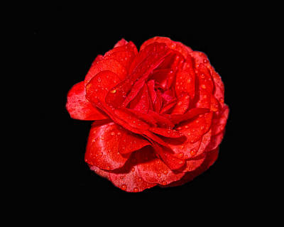 Photograph - Red On Black by Van Sutherland