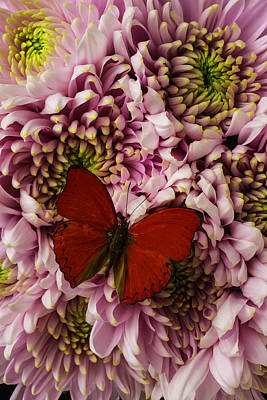 Butterfly Photograph - Red On Pink by Garry Gay