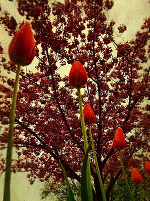 Photograph - Red On Red by Michelle Calkins