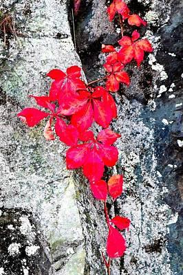 Red On Rock Art Print by Carlos Romero