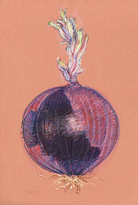 Drawing - Red Onion by Judith Kunzle