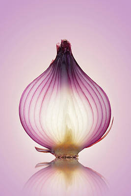 Onion Wall Art - Photograph - Red Onion Translucent Layers by Johan Swanepoel