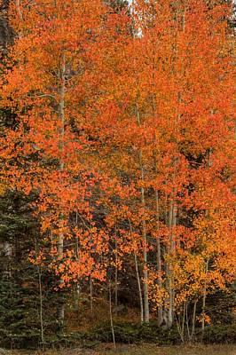 Autumn Photograph - Red Orange by Bill Sherrell