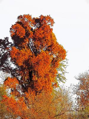 Digital Art - Red-orange Fall Tree by Craig Walters