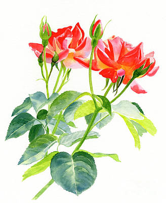 Red Orange Rose Blossoms With Buds Original by Sharon Freeman