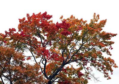 Photograph - Red Orange Treetop by Ellen Barron O'Reilly