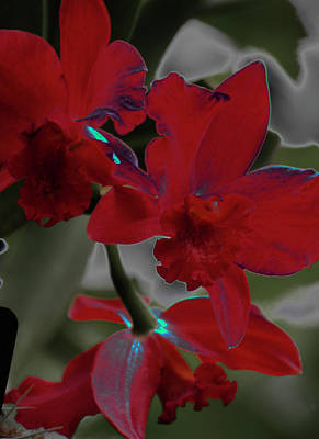 Photograph - Red Orchid 2 by Susan Garrett