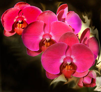 Photograph - Red Orchid11 by Susan Crossman Buscho