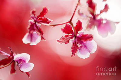 Photograph - Red Orchids by Eyzen M Kim
