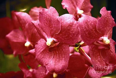 Red Orchids Original