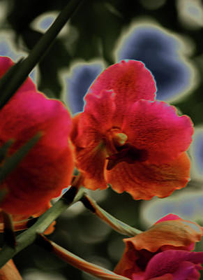 Photograph - Red Orchid by Susan Garrett