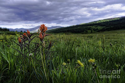Photograph - Red Paintbrush by Bitter Buffalo Photography