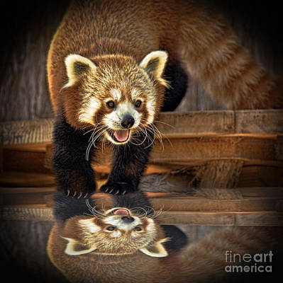 Jim Fitzpatrick Digital Art - Red Panda Altered Version by Jim Fitzpatrick