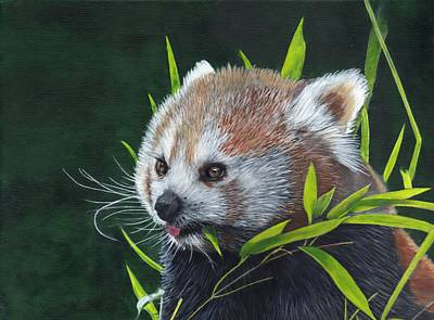 Painting - Red Panda by John Neeve