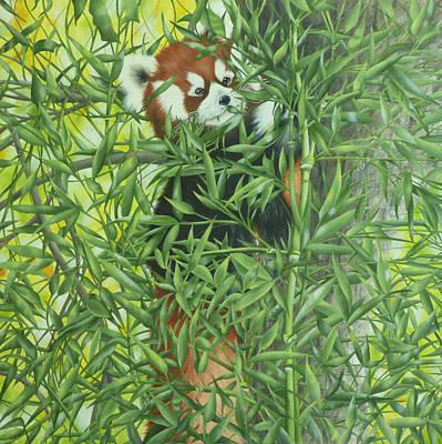 Red Panda Painting - Red Panda by Linda Stockman