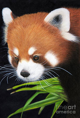 Painting - Red Panda by Tanya Tyrer
