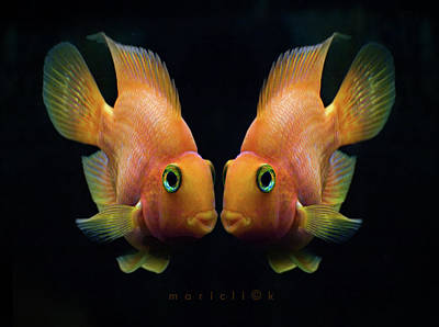 Studio Shot Photograph - Red Parrot Fish by MariClick Photography