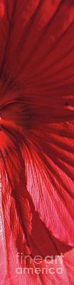 Wall Art - Photograph - Red Petals by Megan Cohen