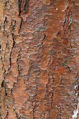 Photograph - Red Pine Bark by Mary Bedy