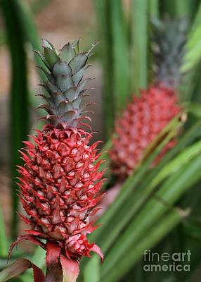 Photograph - Red Pineapples by Sabrina L Ryan