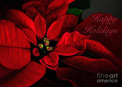 Photograph - Red Poinsettia Happy Holidays Card by Lois Bryan