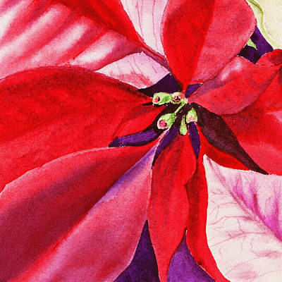 Royalty-Free and Rights-Managed Images - Red Poinsettia Plant by Irina Sztukowski