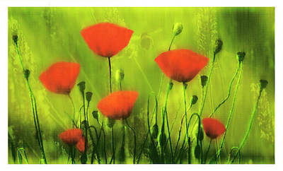 Digital Art - Red Poppies Against A Green Background   by Fine Art By Andrew David