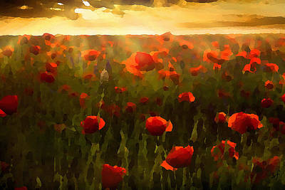 Digital Art - Red Poppies In The Sun by Shelli Fitzpatrick
