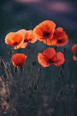 Photograph - Red Poppies Remembrance by Jenny Rainbow