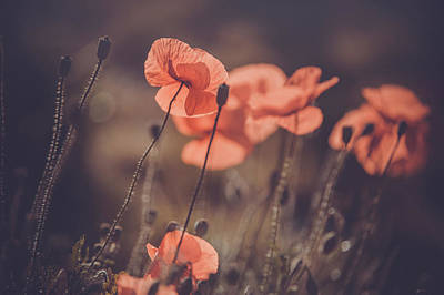 Photograph - Red Poppies Remembrance. Vintage by Jenny Rainbow