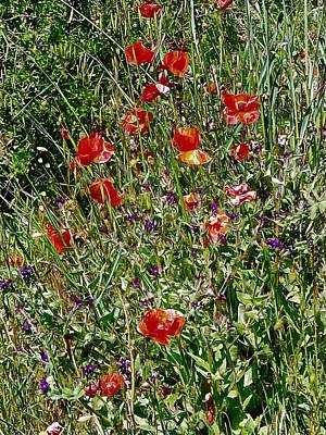 Photograph - Red Poppies With Purple Wildflowers by Dorothy Berry-Lound