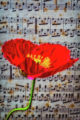 Sheet Music Photograph - Red Poppy And Sheet Music by Garry Gay