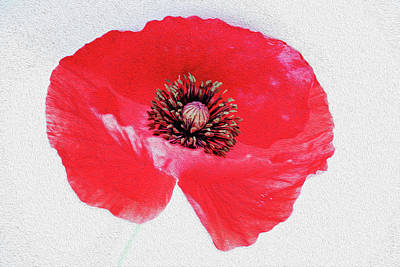 Photograph - Red Poppy Digital Painting by Vishwanath Bhat