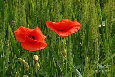 Red Poppy Flowers In Grassland 2 Art Print