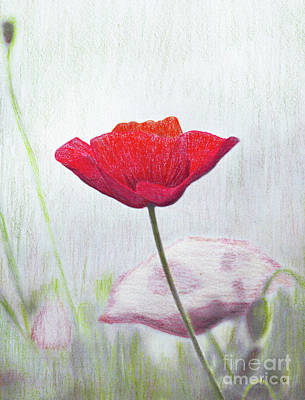 Red Poppies Drawing - Red Poppy by J Marielle