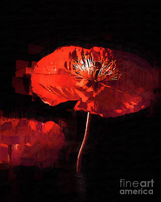 Digital Art - Red Poppy by Kirt Tisdale