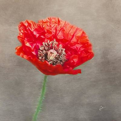 Photograph - Red Poppy On Gray Squared by TK Goforth