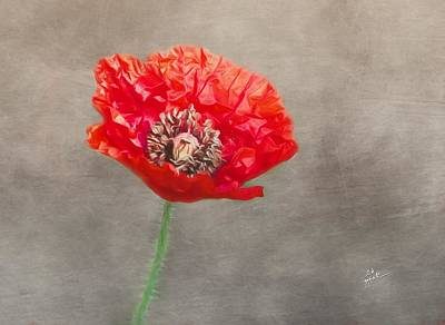 Photograph - Red Poppy On Gray by TK Goforth