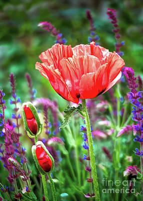 Digital Art - Red Poppy Summer by Gabriele Pomykaj