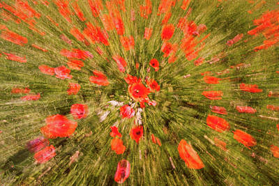 Photograph - Red Poppy Swirl by Michael Blanchette