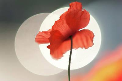 Photograph - Red Poppy. Towards Sun by Jenny Rainbow