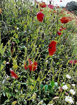 Photograph - Red Poppy Viewpoint by Dorothy Berry-Lound