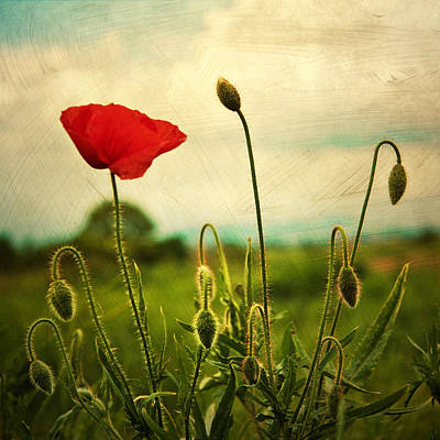 Red Bud Photograph - Red Poppy by Violet Gray