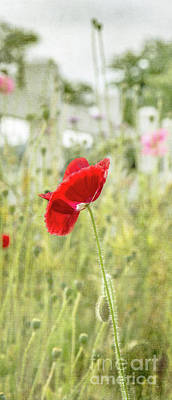 Photograph - Red Poppy Wildflower Field by Cathie Richardson