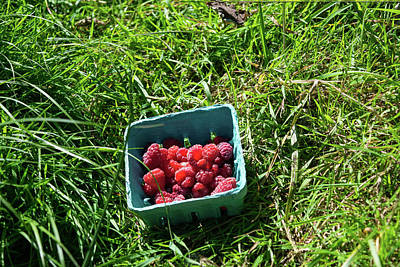 Photograph - Red Raspberries And Green Grass by Tom Cochran