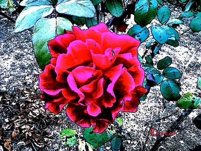 Photograph - Red General Jacqueminot Rose by Sadie Reneau